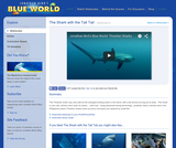 The Shark with the Tall Tail: Thresher Sharks