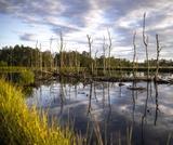 PEI SOLS Middle School Wetlands: Ecosystem Services