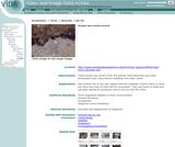 Purple sea urchin swarm