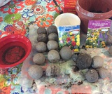 Making Seed Bombs