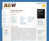 Aedes triseriatus: Information