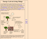 Energy Cycle in Living Things