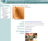 Artemia motion