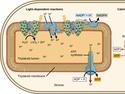 Using Light Energy to Make Organic Molecules