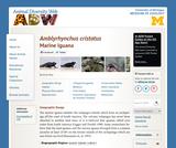 Amblyrhynchus cristatus: Information
