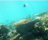 Biology, Ecology, Ecology and the Biosphere, Aquatic Biomes