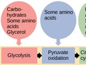 Connections of Carbohydrate, Protein, and Lipid Metabolic Pathways