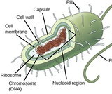 Biology, The Cell, Cell Structure, Prokaryotic Cells