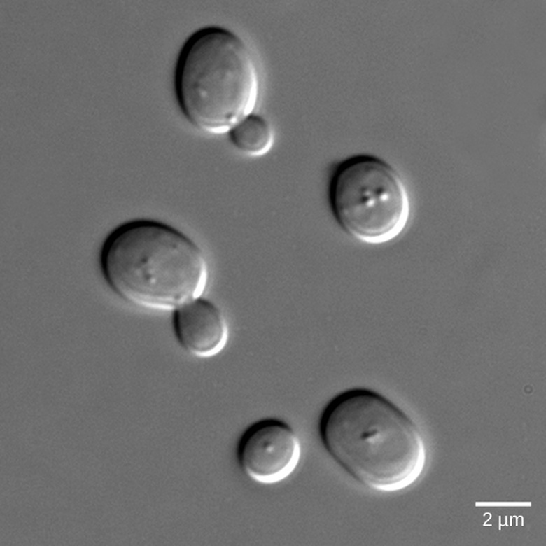Signaling in Single-Celled Organisms