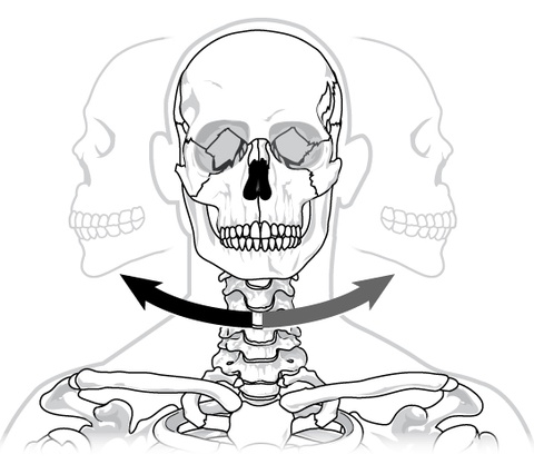 Joints and Skeletal Movement