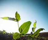 PEI SOLS MS: Regenerative Agriculture