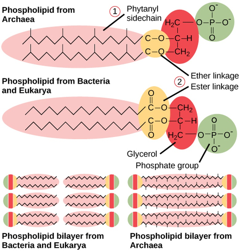 Structure of Prokaryotes