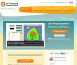 Leaf Photosynthesis