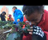Plant Parts - Out Teach
