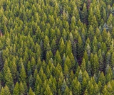 PEI SOLS MS Forests: Carbon Sequestration