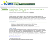 Investigating Trees: Using a dichotomous key to identify local tree types