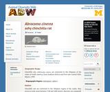 Abrocoma cinerea: Information