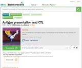 Antigen presentation and CTL