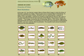 Diversity of Fishes: Bloch Illustrations
