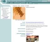 Artemia characteristics