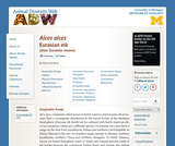 Alces alces: Information