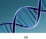 Psychology, Biopsychology, Human Genetics