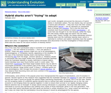 "Hybrid Sharks Aren't ""trying"" to Adapt"