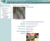 Artemia appendages
