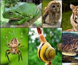 Biology, Biological Diversity, Introduction to Animal Diversity, Introduction