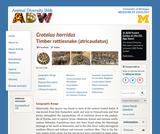 Crotalus horridus: Information