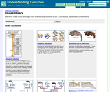 Understanding Evolution: Image Library