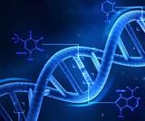 12.1 Patterns of Inhertance  Mendelian Genetics