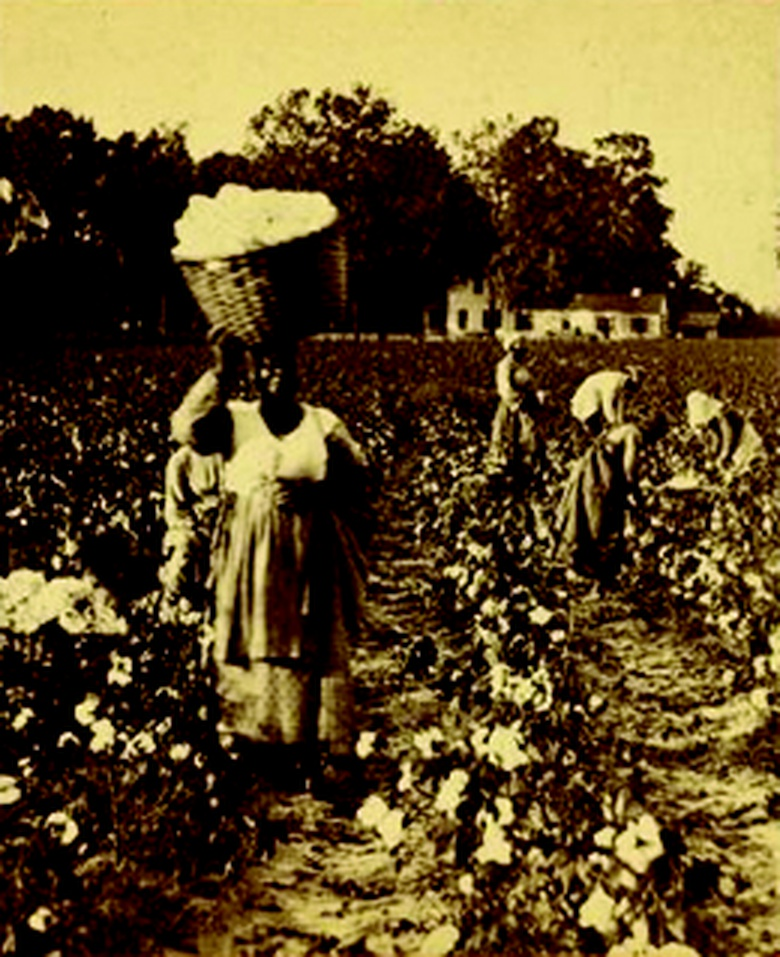 The Economics of Cotton