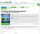 Visualizing Gene Expression