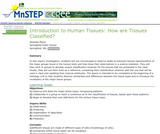 Introduction to Human Tissues: How are Tissues Classified?