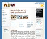 Arctocephalus australis: Information