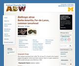 Bothrops atrox: Information