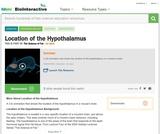 Location of the Hypothalamus