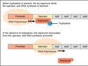 Prokaryotic Gene Regulation