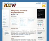 Ambystoma annulatum: Information