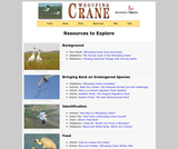 Seasonal Migrations: Whooping Cranes