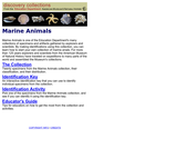 Discovery Collection: Marine Animals