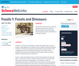Fossils 1: Fossils and Dinosaurs