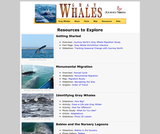 Seasonal Migrations: Gray Whales
